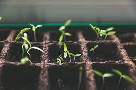 outgrowingpeople
